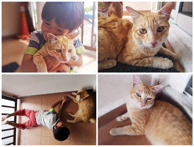 SWiPEL Serai Wangi Hapuskan Kutu Kucing dengan Semulajadi selamat